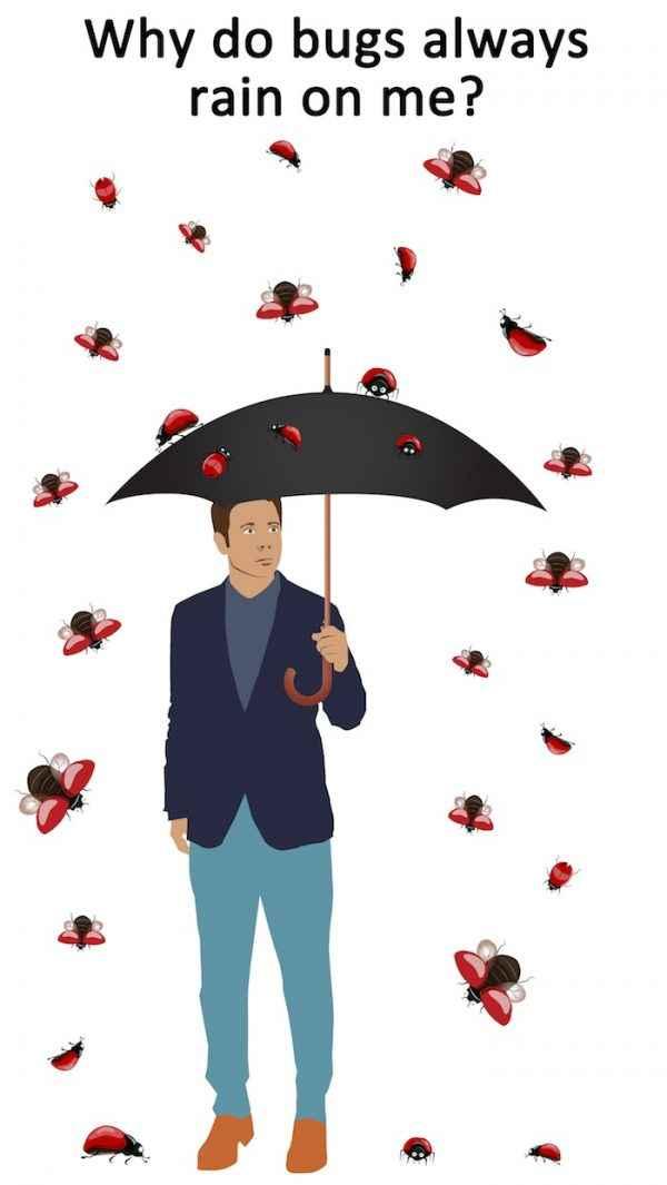 Bug Rain