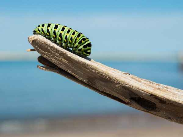 caterpillar on a branch
