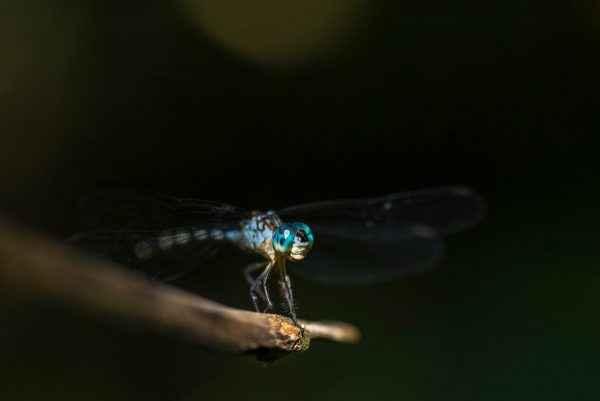 bug lifecycle